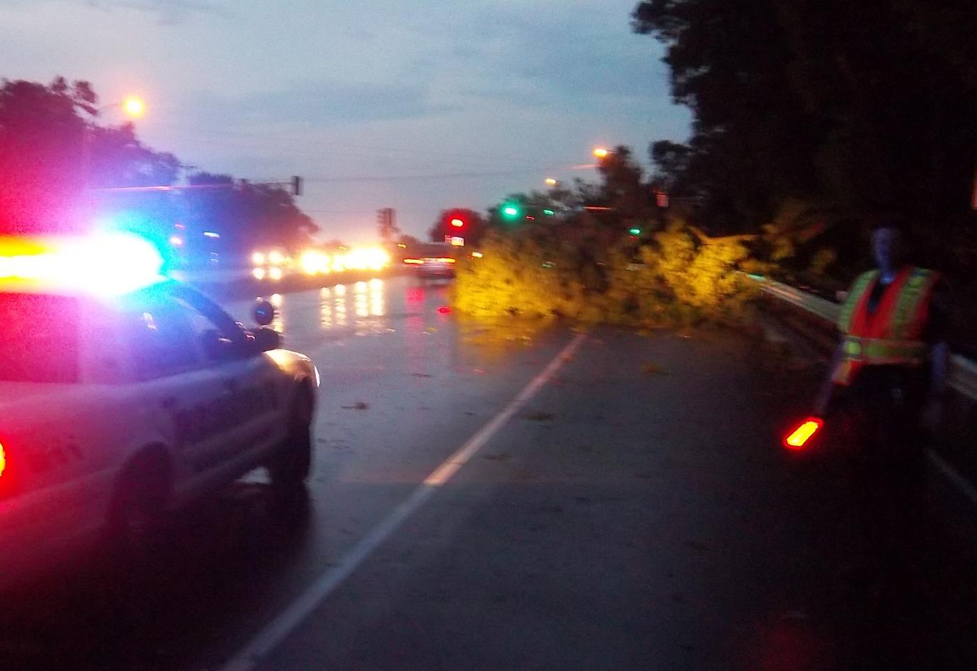 Police on the scene of a fallen tree on the highway